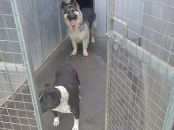 The Lodge Boarding Kennels Amp Cattery Sleaford
