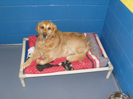 On bed in kennels