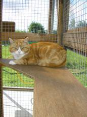 Woodside Cattery, Bourne