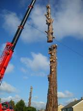 Downlands Tree Surgery Ltd, Warminster
