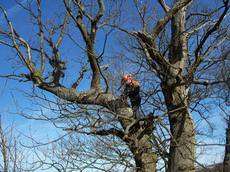 The Tree Surgeons Ltd, Caerphilly
