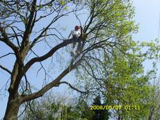 M  Hodson Tree Services, Burntwood