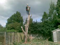 Bennetts Tree Care, Wokingham