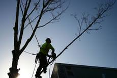 Blue Trees Complete Tree Services Ltd, Colchester