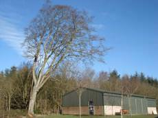 The Skye Man Tree Services, Linlithgow