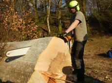 Wildewood Tree Services 	 , Llanbedr