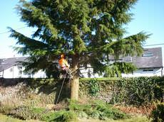 LJX Ltd - Tree Surgeons, Tree Felling, Langbank