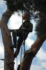 Hampshire Tree Services, Southsea