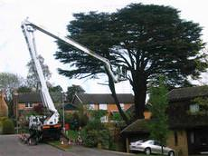 British Tree Services, Maidenhead