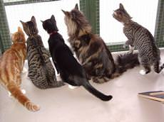 The Bythams Cattery, Grantham