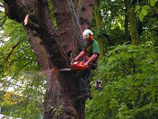 Cut Above Tree Services, Newton