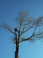 Advanced Arborcare Ltd, Poole