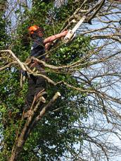 Mitchell Tree Surgery, Exeter