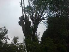 Cofton Tree Services, Birmingham