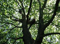 Devey Tree Care, Thame