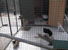 Pet Chalet Holidays (Cattery), Great Yarmouth
