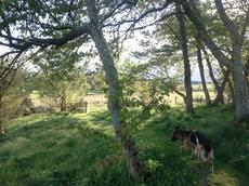 Colliestown Farm Kennels, Banchory