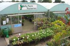 Holly Farm Nurseries, Whitchurch