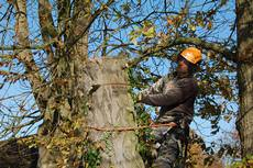 Beechwood Tree Care Ltd, Twyford
