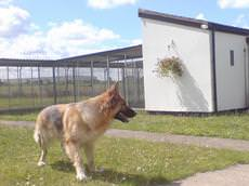 Holmewood Boarding & Training Kennels, Doncaster